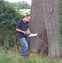 Tree Surveys | Principal Trees